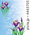 あやめ 菖蒲 花のイラスト 4443703