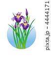 あやめ 菖蒲 花のイラスト 4444171