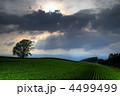 哲学の木 薄明光線 4499499