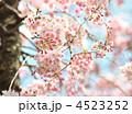 八重紅枝垂(ヤエベニシダレ) 4523252