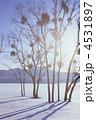 ぬくもり・やどりぎ(田沢湖・冬) 4531897