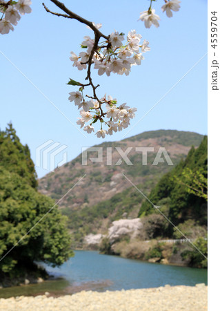 桜と水辺 4559704