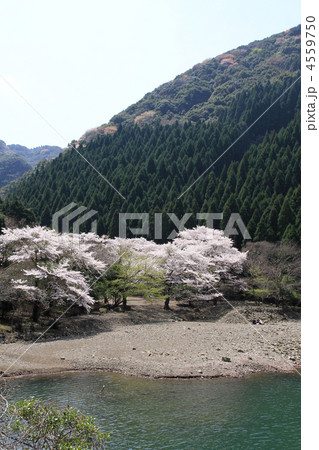 桜と水辺 4559750