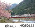 遠山川 カワヅザクラ 桜並木の写真 4565988