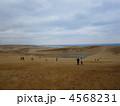 鳥取砂丘 砂丘 丘の写真 4568231