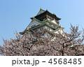 大阪城 桜 ソメイヨシノの写真 4568485