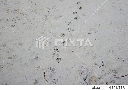 鴨の足跡 4568558