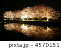 夜桜 ライトアップ 桜並木の写真 4570151