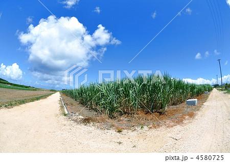 波照間島でのキビ畑と分かれ道 4580725