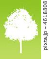 楓の木-イエローグリー 4618808