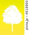 楓の木-イエロー 4618860
