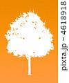 楓の木-オレンジ 4618918