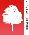 楓の木-レッド 4618926