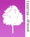 楓の木-レッドパープル 4618931