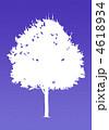 楓の木-パープル 4618934