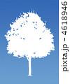 楓の木-ブルー 4618946