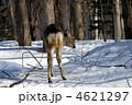 子鹿のおしり? 4621297