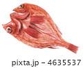 キンキ キチジ きんきのイラスト 4635537