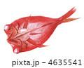 キンメ 金目鯛 キンメダイのイラスト 4635541