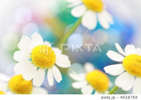 白い花 カラフルなバック 4638769