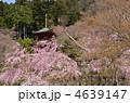 勝尾寺  4639147