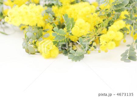 ミモザの花* ナチュラル 4673135