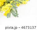 ミモザの花* ナチュラル 4673137