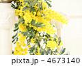 ミモザの花* インテリア 4673140