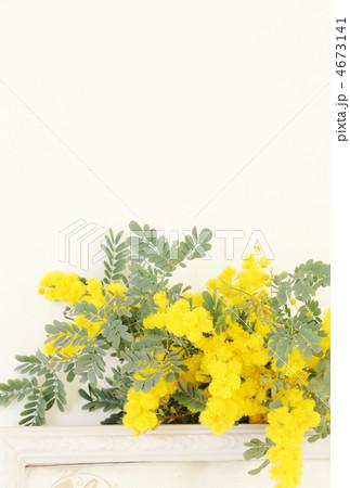 ミモザの花* 雑貨 4673141