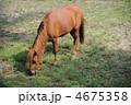 野間馬 4675358
