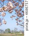 ある晴れた日の公園の普賢象(フゲンゾウ) 4686757