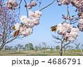 ある晴れた日の公園の普賢象(フゲンゾウ) 4686791