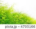 新芽 新緑 若葉の写真 4703166