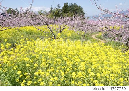 春の小径 4707770