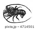 いせえび イセエビ 伊勢海老のイラスト 4714501