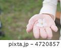 てのひらの桜 4720857