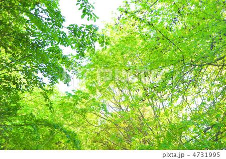 緑 4731995