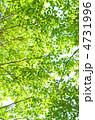 緑 4731996