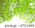 緑 4731999