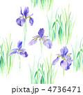 アヤメ 花 菖蒲のイラスト 4736471