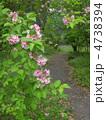 谷空木の花 4738394