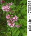 谷空木の花 4738396