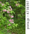 谷空木の花 4738397