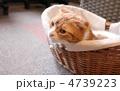 猫 4739223