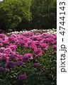 しゃくやく シャクヤク 花の写真 4744143