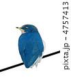 つばめ 燕 ツバメのイラスト 4757413