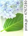花 紫陽花 あじさいの写真 4767280