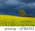 雲間の光芒に輝くキガラシ丘と哲学の木 4784303