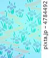 あやめ 花 菖蒲のイラスト 4784492