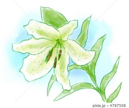 ユリの花イラストのイラスト素材 4797508 Pixta